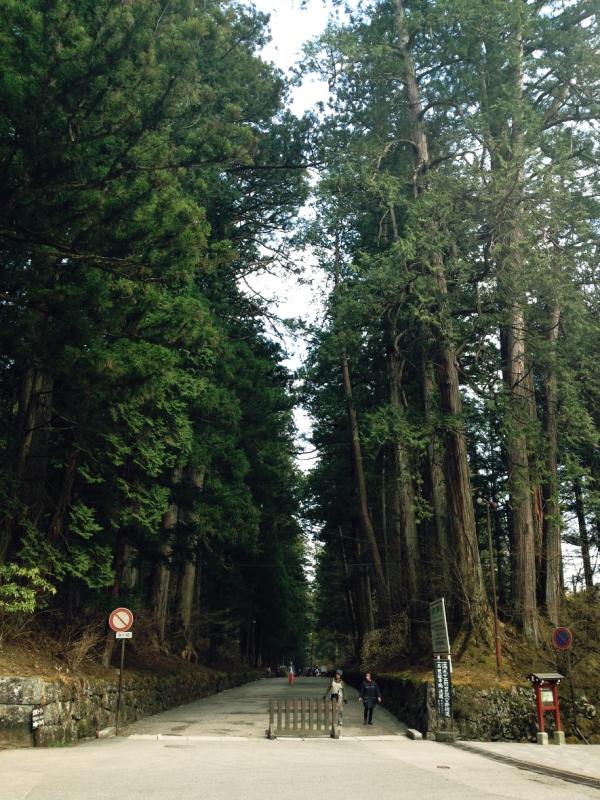 Nikko Japan forest Unesco Japán Giapoone