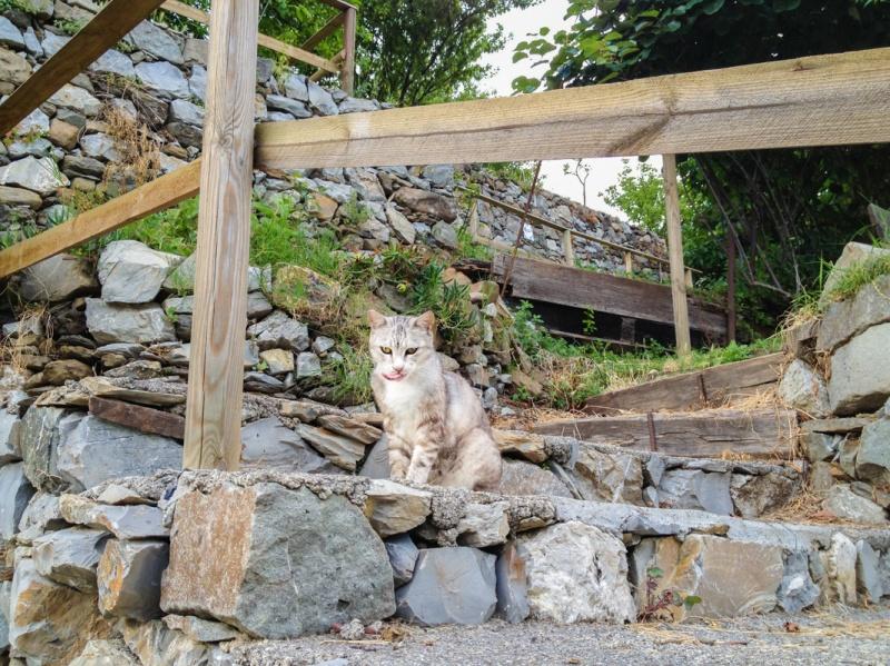 Cinque Terre, La Spezia, Italy, Monterosso al Mare, Cat