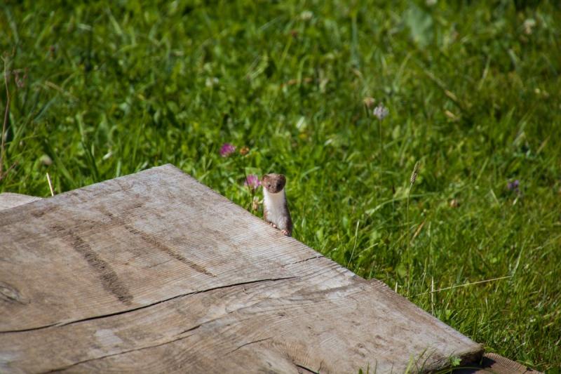 lago di carezza italia dolomiti italia dolomites lake forest mountain travel ferret