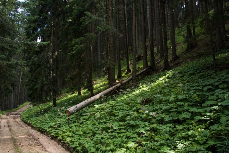 lago di carezza italia dolomiti italia dolomites lake forest mountain travel