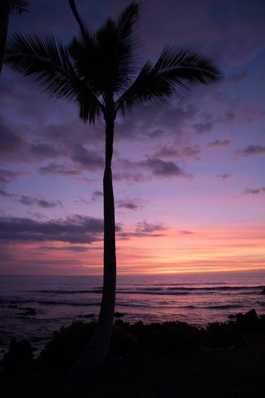sunset hawaii maui big island beach sun palm tree