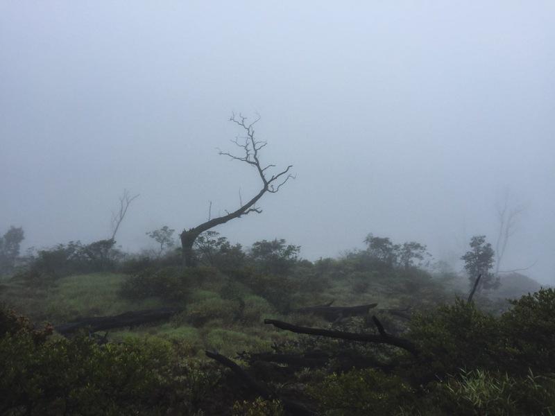 hawaiibig island volcano national park crater forest fog
