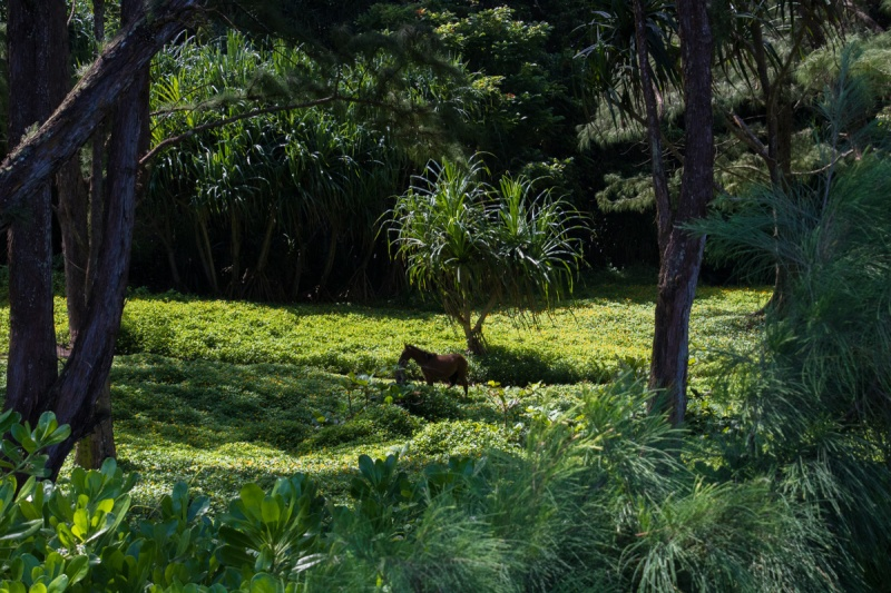 waipio valley big island hawaii beach horse