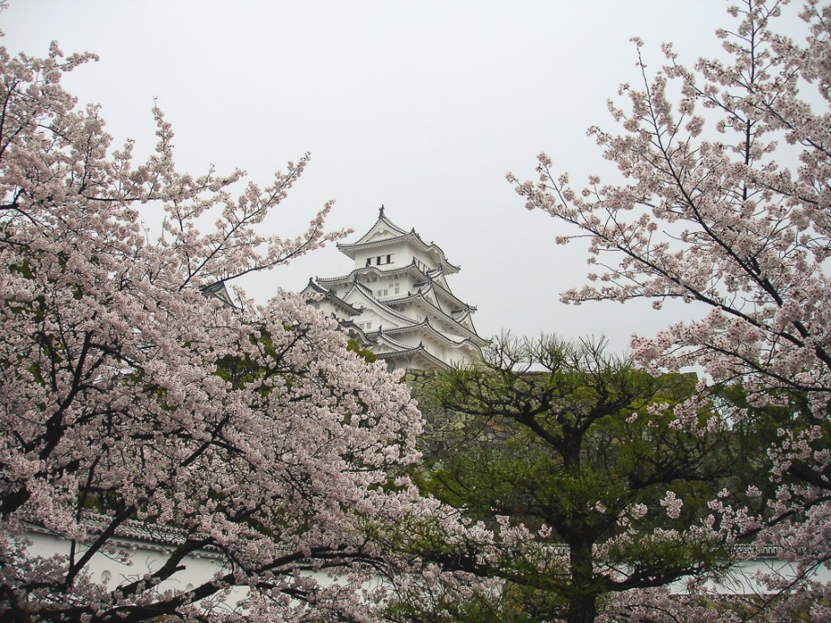 Japan Himeji Castle cherry blossom