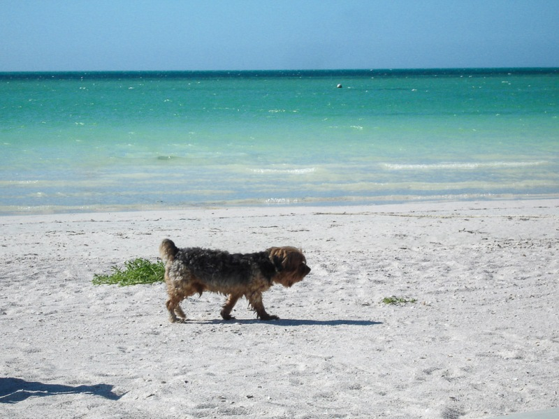Mexico Holbox Beach Dog