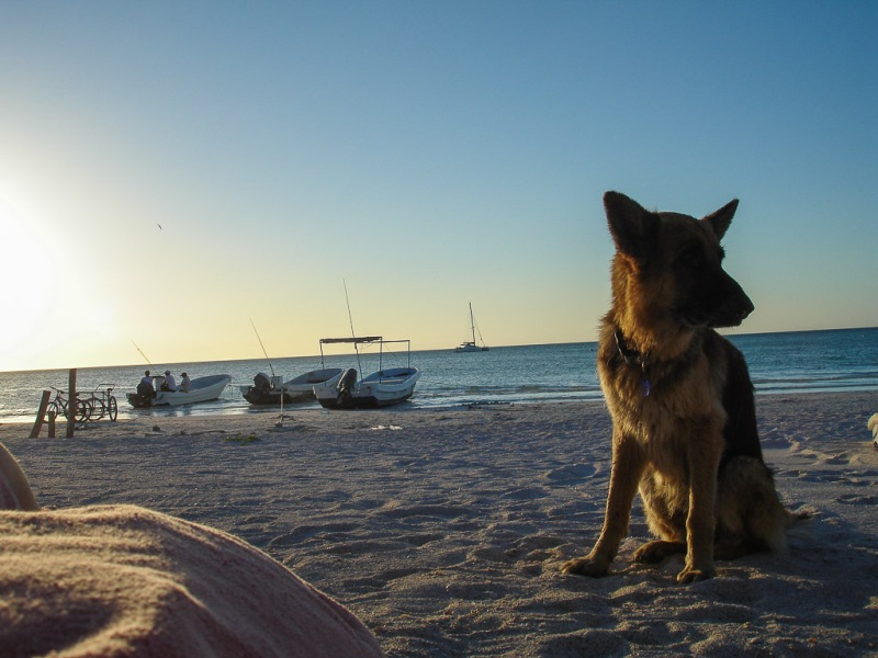 Mexico Holbox Beach Sunset dog